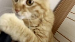 Thumbnail of Cat and vacuum cleaner