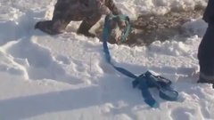 Thumbnail of Russian folks save a moose from freezing to death.