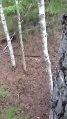 Thumbnail of A hunter in a tree-stand gets an unexpected visit.