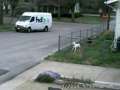Thumbnail of Sometimes Security Cameras catch a gem!