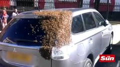 Thumbnail of 20,000 bees chase follows car for 2 day after queen bee gets trapped in boot in Wales