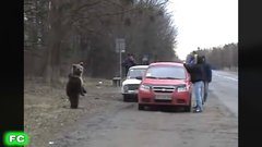 Thumbnail of Man vs Bear Compilation