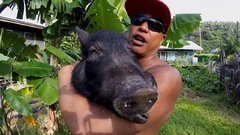 Thumbnail of Kama the Surfing Pig