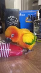 Thumbnail of A Parrot And A Plastic Cup