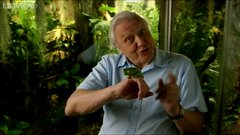 Thumbnail of Frog applies 'sun cream' - Natural World: Attenborough's Fabulous Frogs