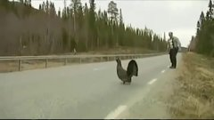 Thumbnail of Angry Turkey Attacks TV Reporter