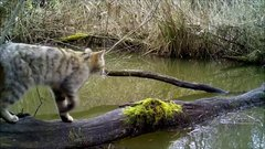 Thumbnail of A Camera-trap captures the local wild life.