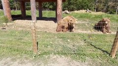 Thumbnail of One Chilled Bear