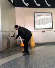 Thumbnail of Staten Island Ferry pigeon's water fountain moment