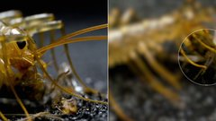 Thumbnail of The House Centipede is Fast, Furious, and Just So Extra
