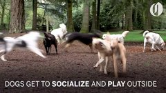 Thumbnail of Doggie School Bus picks up pups for 'school'