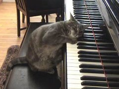 Thumbnail of Piano playing cat