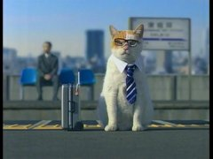 Thumbnail of Japanese business cat
