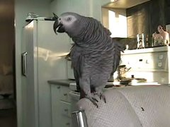 Thumbnail of Beatboxing parrot